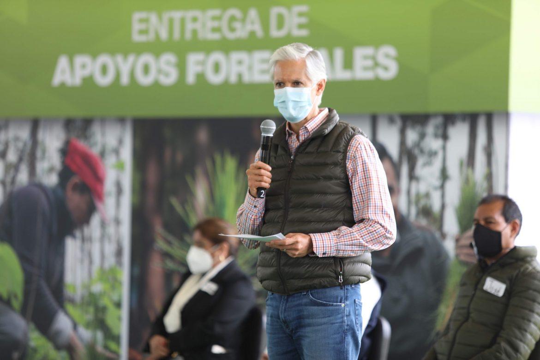 ENTREGA ALFREDO DEL MAZO RECURSOS A PLANTACIONES FORESTALES DE 11 MUNICIPIOS MEXIQUENSES