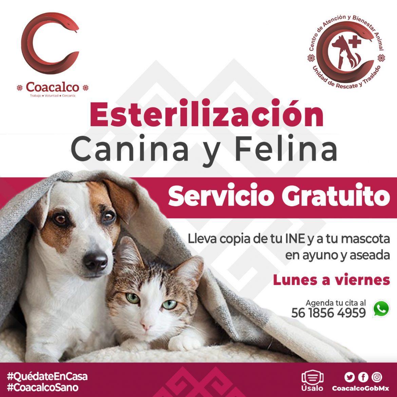 GOBIERNO DE COACALCO MANTIENE ACCIONES PARA EL BIENESTAR ANIMAL