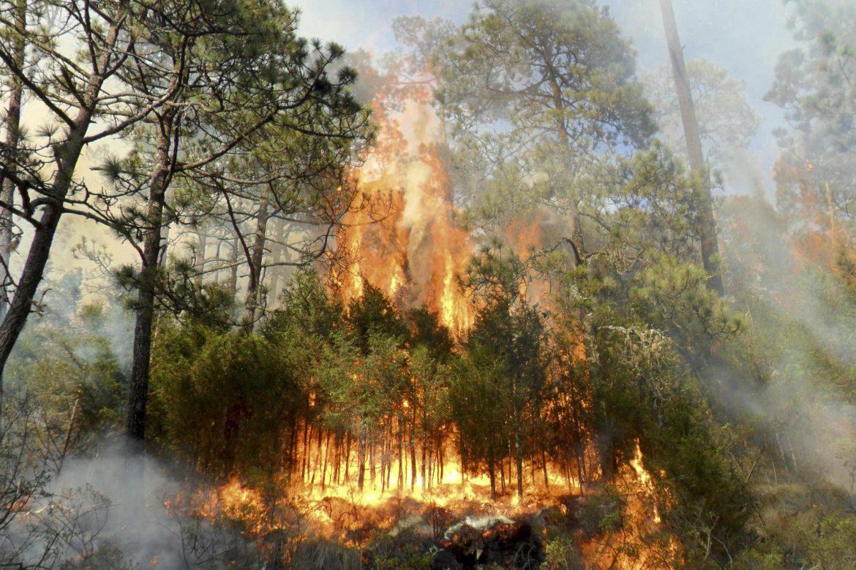 SOFOCAN 74 INCENDIOS FORESTALES EN EDOMÉX EN LO QUE VA DEL AÑO